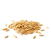 hydrolized wheat protein